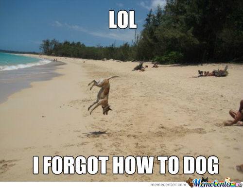 i-forgot-how-to-dog